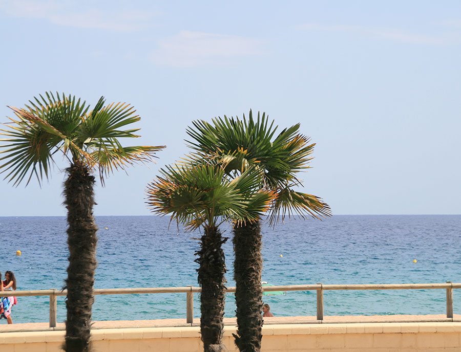 Jugendreisen Blanes Spanien Informationen - Palmen am Meer