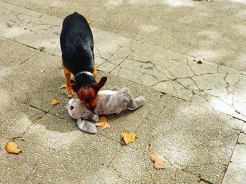 Hund mit Stoffhasen