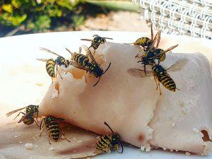 Insektenfänger Schinken für Wespen