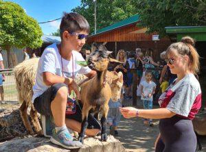 Siofok Urlaub 2021 Tierpark Bella Stables and Animal Park SIÓFOK